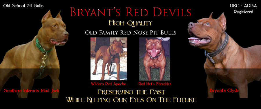 Bryant's Red Devils Old Family Red Nose Pit Bull Breeders