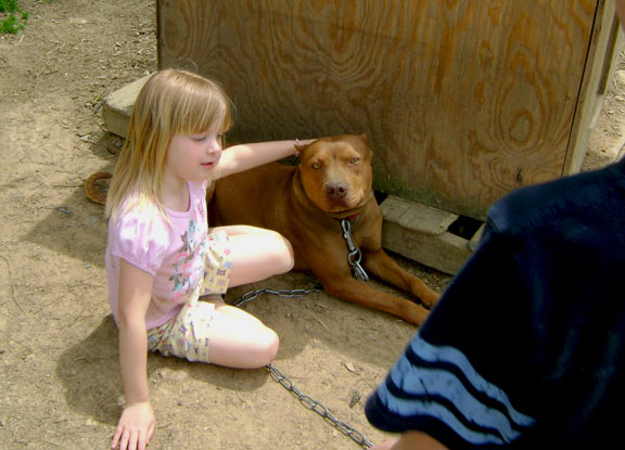 Red Red Nose Pit Bull Playing with Kids