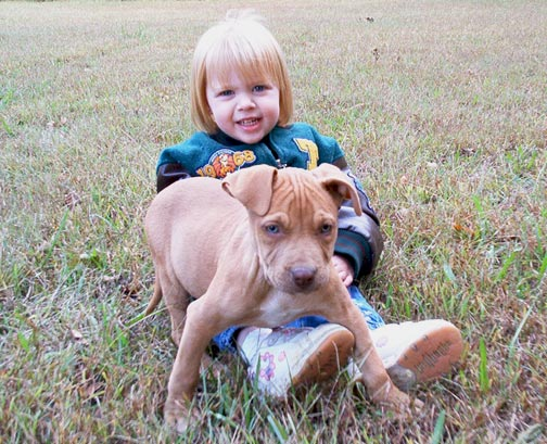 Red Nose Pit Bull Puppy Playing with Kids