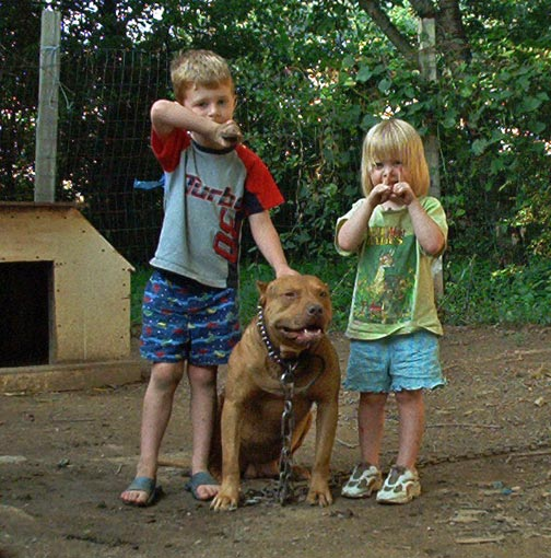 Red Nose Pit Bull Playing with Kids