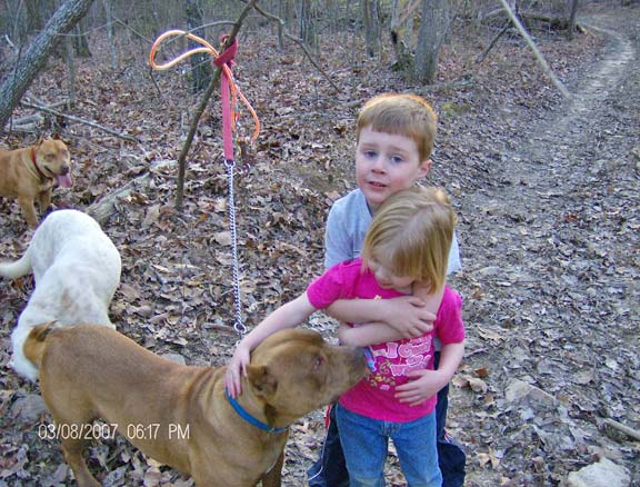Chocolate Red Nose Pit Bull Playing with Kids